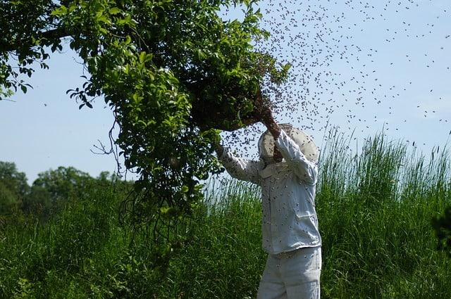 Ein Mensch wird von tausenden von Bienen angegriffen