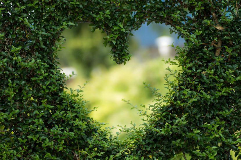 Lichtes Herz zwischen Laub