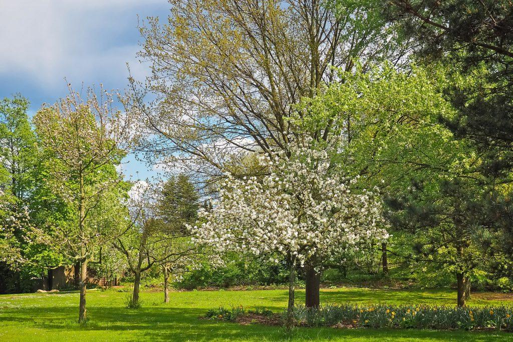 Ein Garten mit Bäumen - siehst du das Ganze oder achtest du mehr auf Einzelheiten?