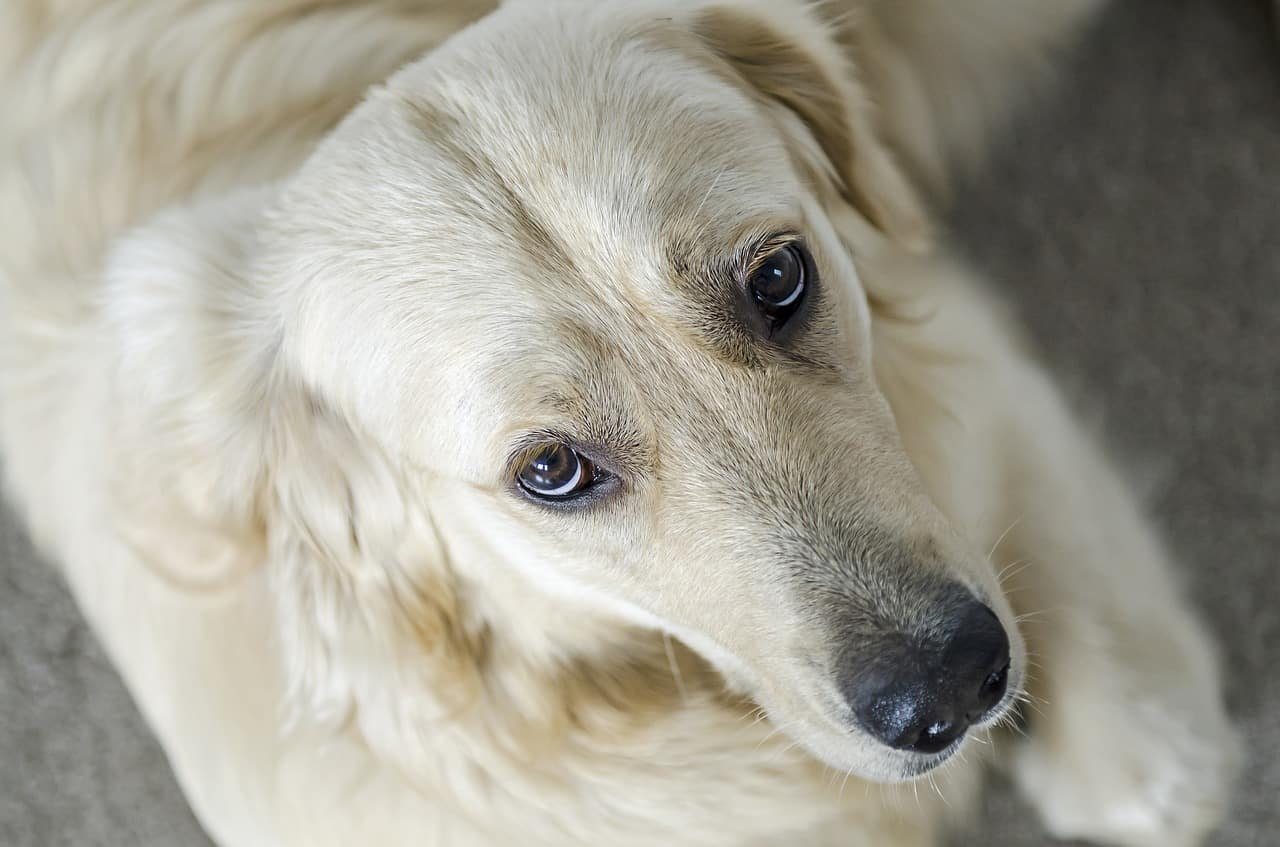 ein Hund