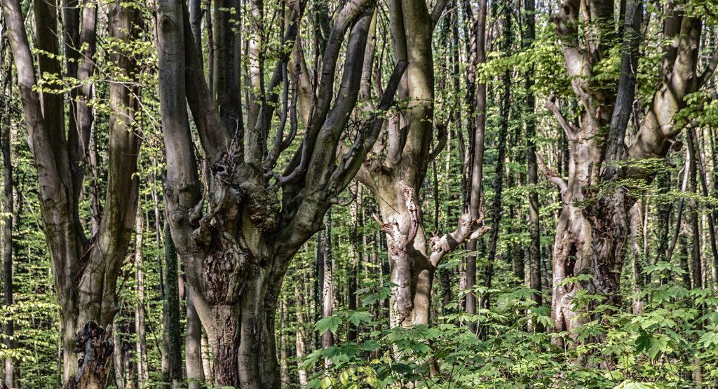 Bäume zeigen ihr Gesicht